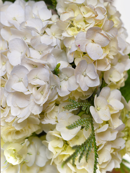 Zoom de Ramo de Flores com hortênsias brancas, para oferta e entrega ao domicílio na zona do Porto e Matosinhos