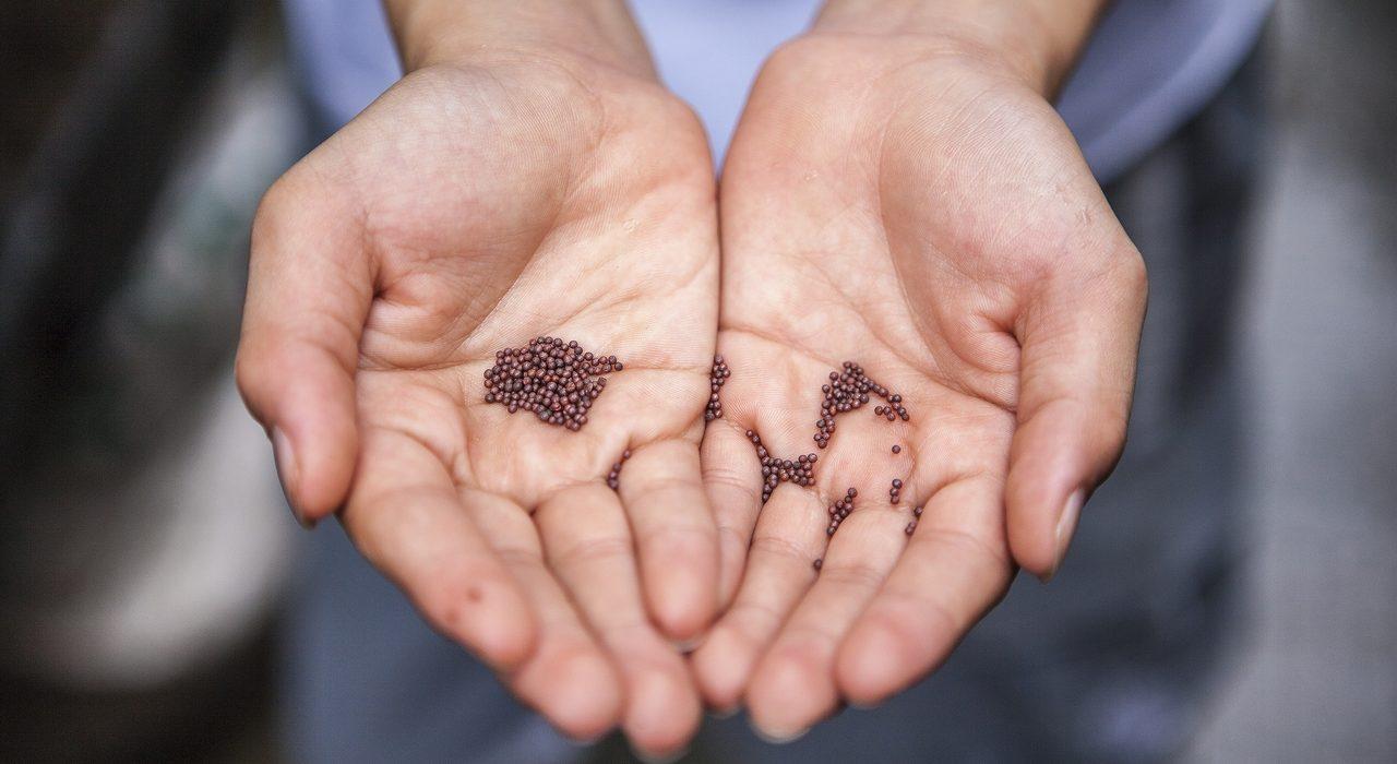 Terrárea_sementes